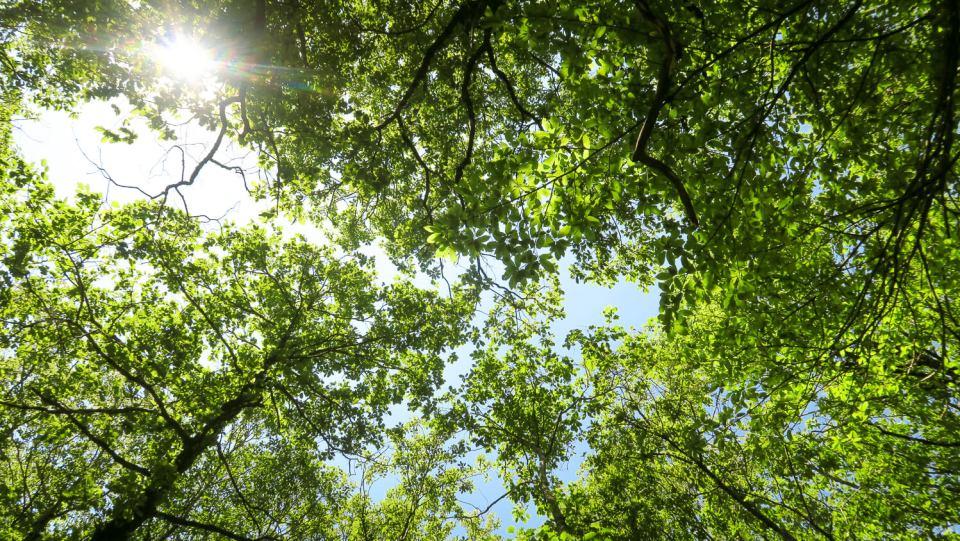La forêt verdoyante au niveau du Pont du Vialais