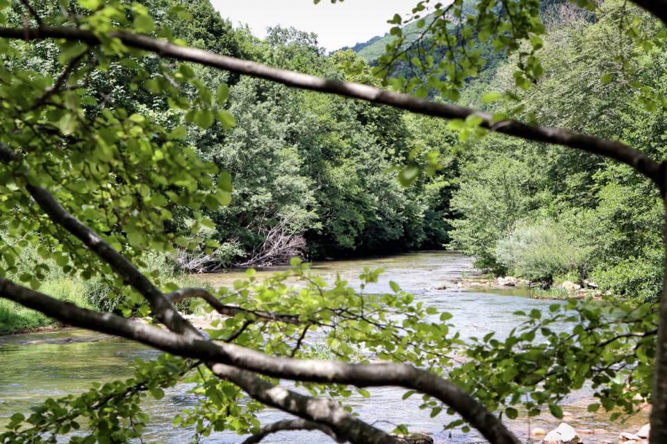 Rivière Dourbie vue à travers les arbres