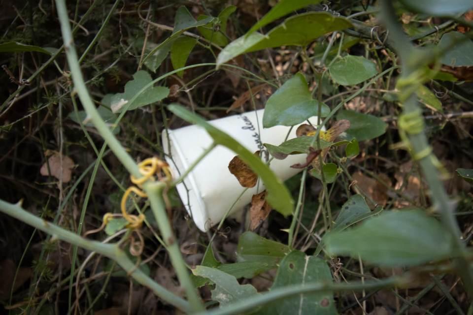 Gobelet jeté dans les buissons au bord de la cascade de Sillans