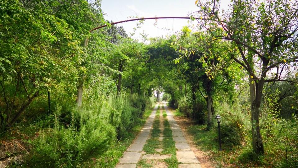 Le vert l'emporte partout dans l'arrière pays des Cinque Terre - Ici au domaine viticole Cerrolungo