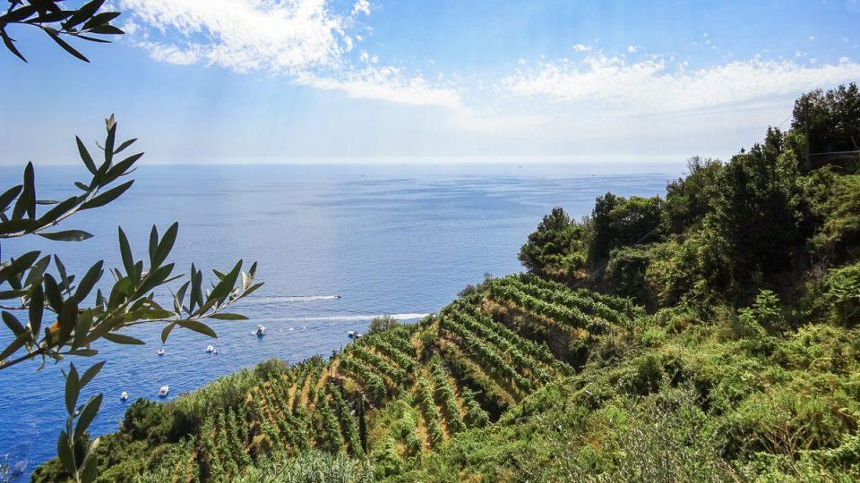Culture de vignes en terrasse aux Cinque Terre