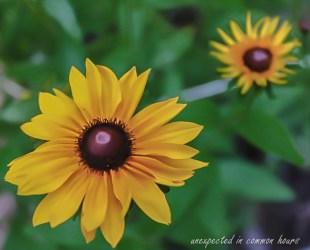 Unknown wildflower