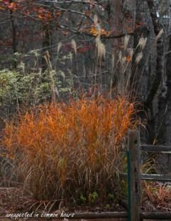 golden-grasses-4
