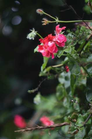 spain tenerife plant