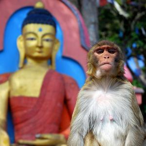 Monkey Buddha