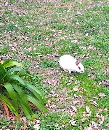 White rabbits at St Nicholas Cathedral