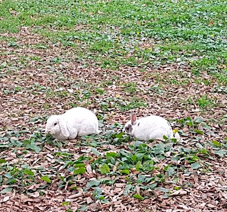 Rabbits at St Nicholas Cathedral