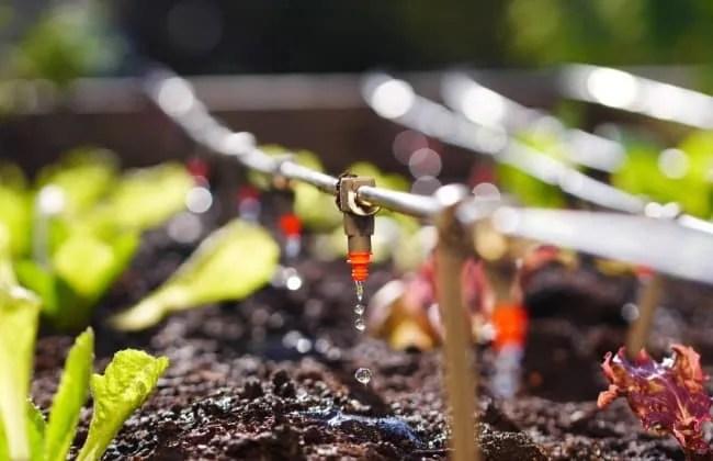 Irrigazione a Goccia: Tutto Quello Che ti Serve Sapere.
