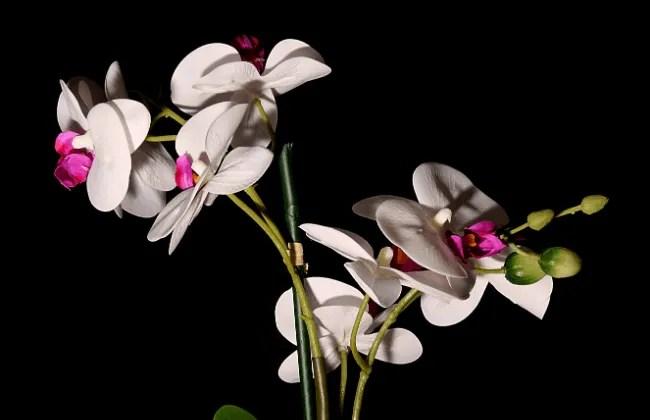 Consigli per far rifiorire le Orchidee.