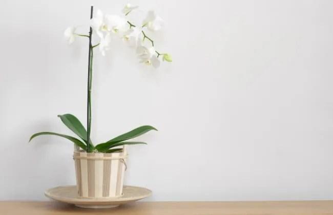 Orchidee, dove posizionarle in casa.