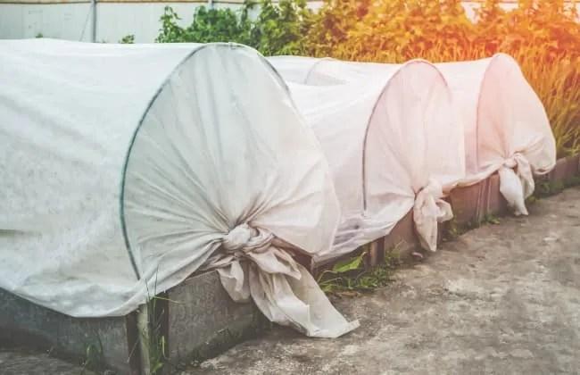 Come proteggere il tuo giardino e le piante dal freddo.