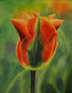 Red Tulip ©2010 Sue Wilkinson - Watercolour