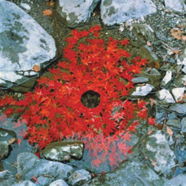 Maple leaves, Water and Rocks - Andy Goldsworthy
