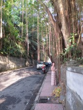 A tree-lined street in downtown Ubud.