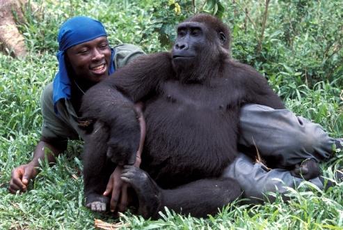 gorille homme.jpg