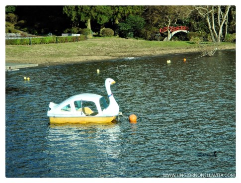 So cute! I'm definitely renting one of these swan boats next time! :)