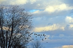 There's something about the birds, trees and the clouds that I love in this pic. :)