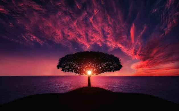 silhouette of tree near body of water aligning with the sun as with living as your authentic self