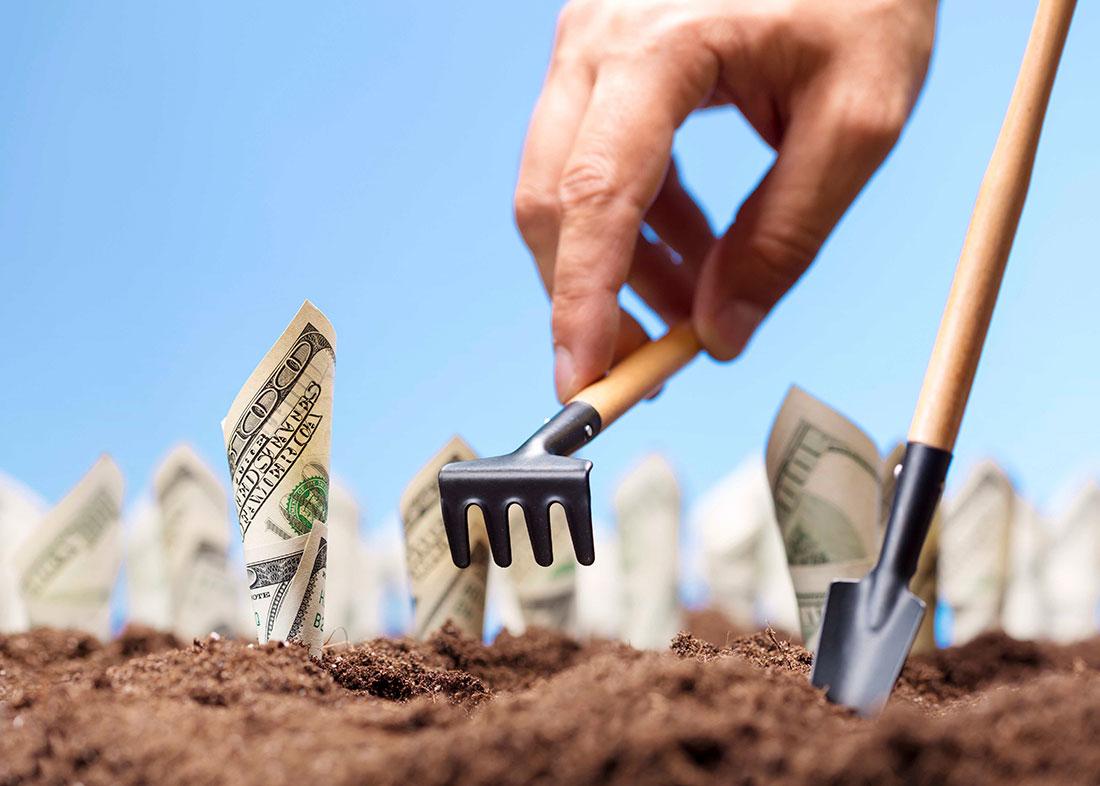 50 Profitable Plants to Grow