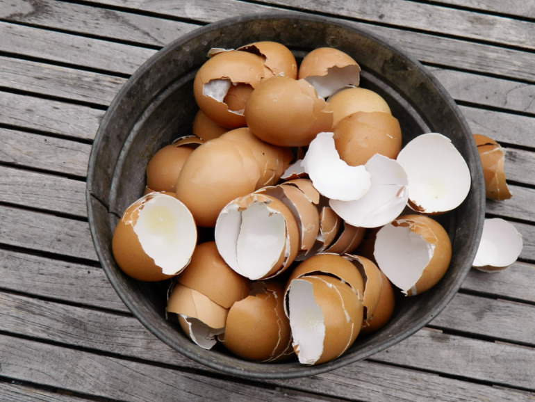 coquilles d'oeuf pour éloigner les limaces