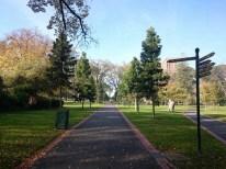 Central Park anyone?