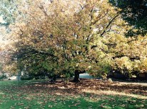 Autumn fall loves