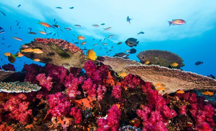 civis ocean 2
