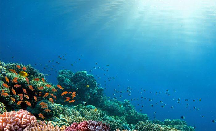 civis ocean 6