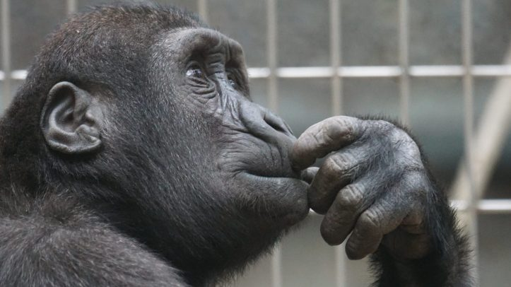 view ape thinking primate.  We havent changed so much really.  We make decisions about people, vaccines and how to behave on primal instincts