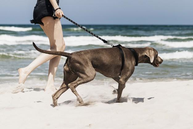 Izquierda Unida Podemos solicita la habilitación de una playa para perros