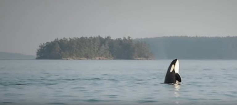 A Story About Whales, Fish and Trees