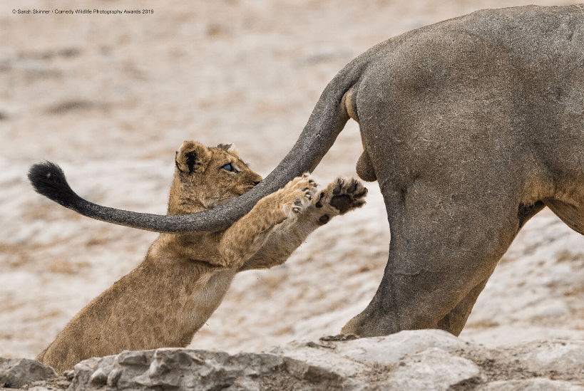 Screenshot_2019-11-20 2019 Winners Comedy Wildlife Photography Awards - Conservation through Competition