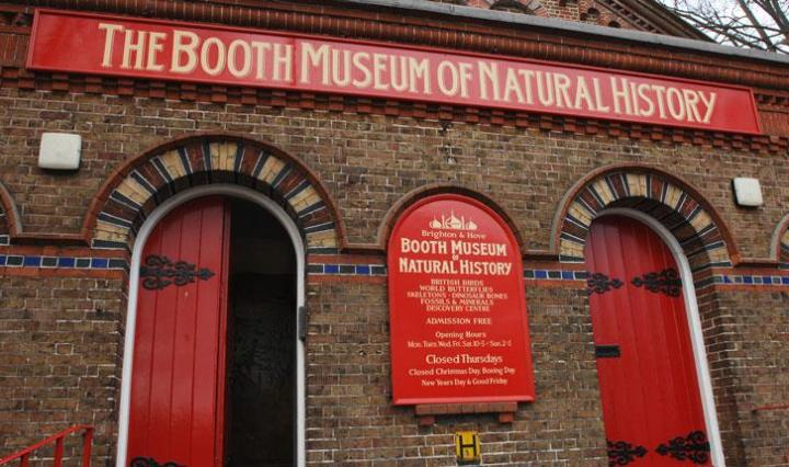 The Booth Museum of Natural History