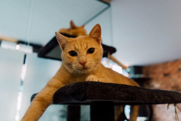Cat Cafe in Romsey