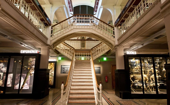 Free things to do in Manchester, Manchester Museum