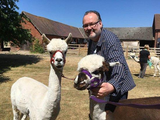 Middle England Alpaca Farm