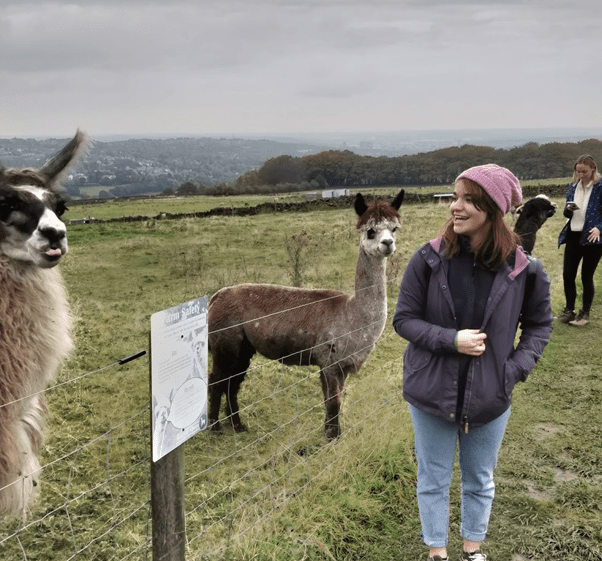 where to see alpacas in sheffield