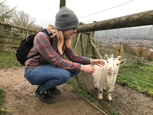 best things to do in Bath for students - Bath City Farm