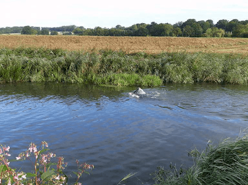midhurst wild swimming