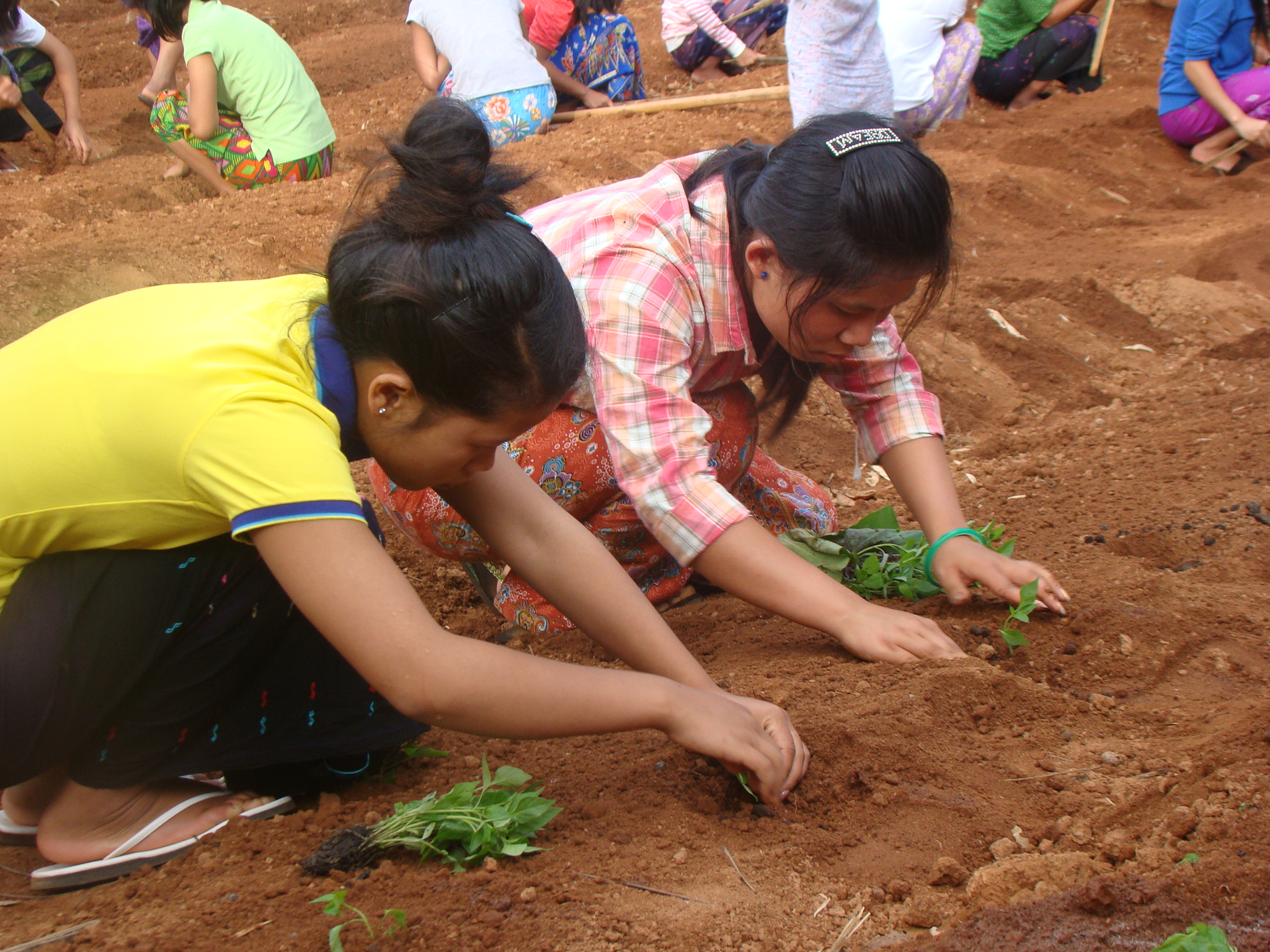 From this. Children Planting the garden (1)