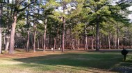 Pine Barren where the battle of Cold Harbor will take place.