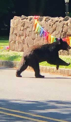 Neighborhood proceeds with caution after bear sighting