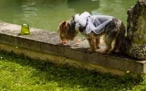 Invite your pet to your wedding ceremony