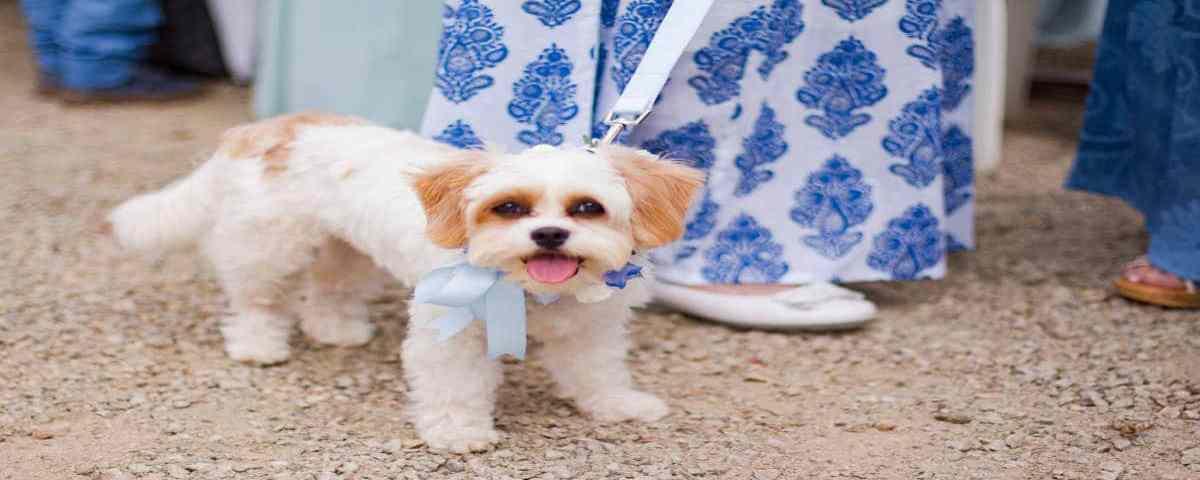 Invitez votre animal de compagnie à votre cérémonie laïque