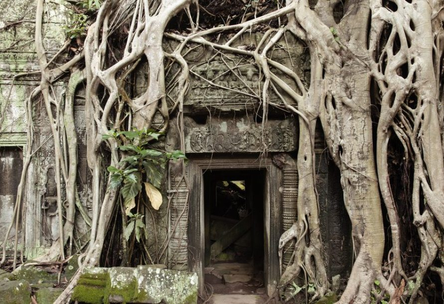 Roots cover the ruin walls of Ta Prohm Temple, Angkor Historical Park, UNESCO World Heritage, Cambodia.
