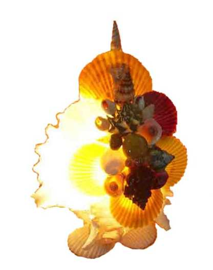 Seashell Lamp 5