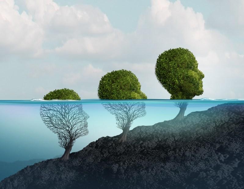 hjernens utvikling