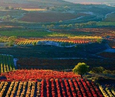 Rioja Wine Tour