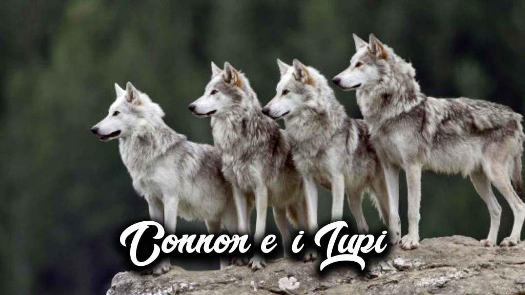 connor-e-i-lupi