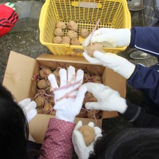 震災支援 農業支援 (2)